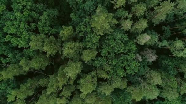 erdőn repül a fa tetejét zöld erdei légi táj