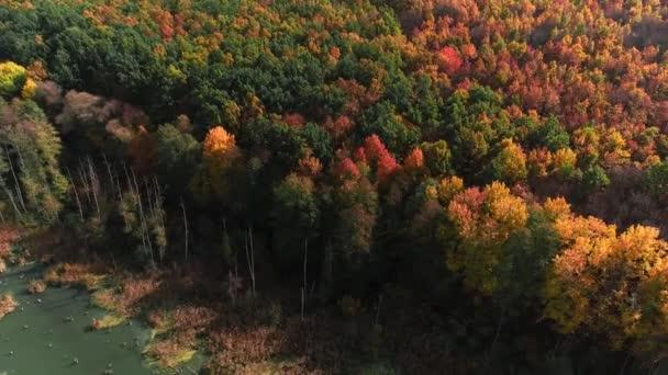 podzimní barvy lesní stromy scenérie shora