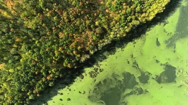 podzim příroda krása močál les stromy drone pohled