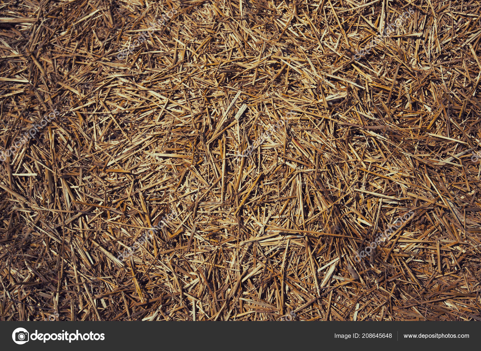 Thatched Background Hay Dry Grass Background Grass Hay Grass