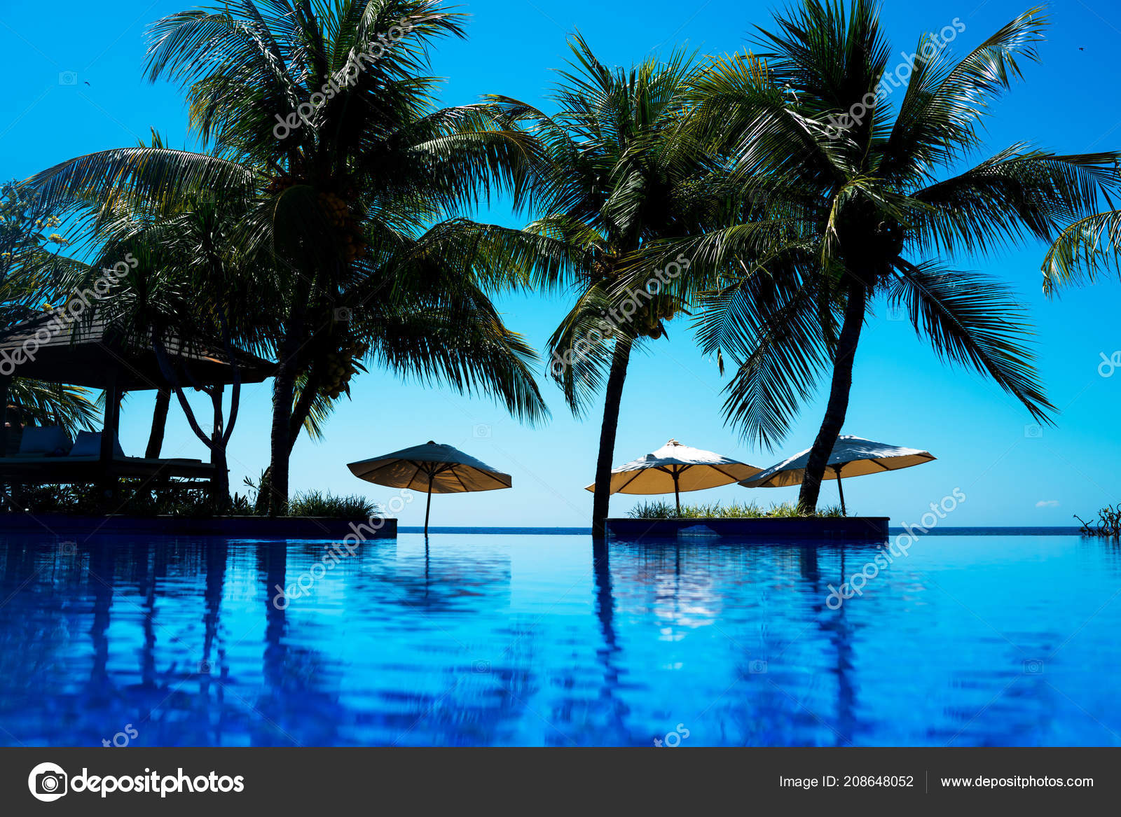 Vacation Background Infinite Swimming Pool Palm Trees Blue Ripped ...
