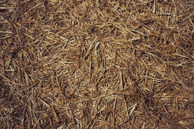 Thatched background, hay or dry grass background. Grass hay, grass texture background. Straw, dry straw, straw background texture. Abstract background by dry grass and yellow grass.