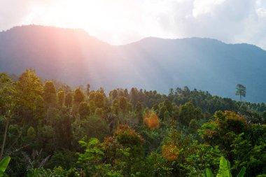 Sunset or sunrise over the trees in the rainforest. Amazing scenic view tropical forest with jungle mountain on background green trees in the morning rays of the sun. Mysterious mountainous jungle.