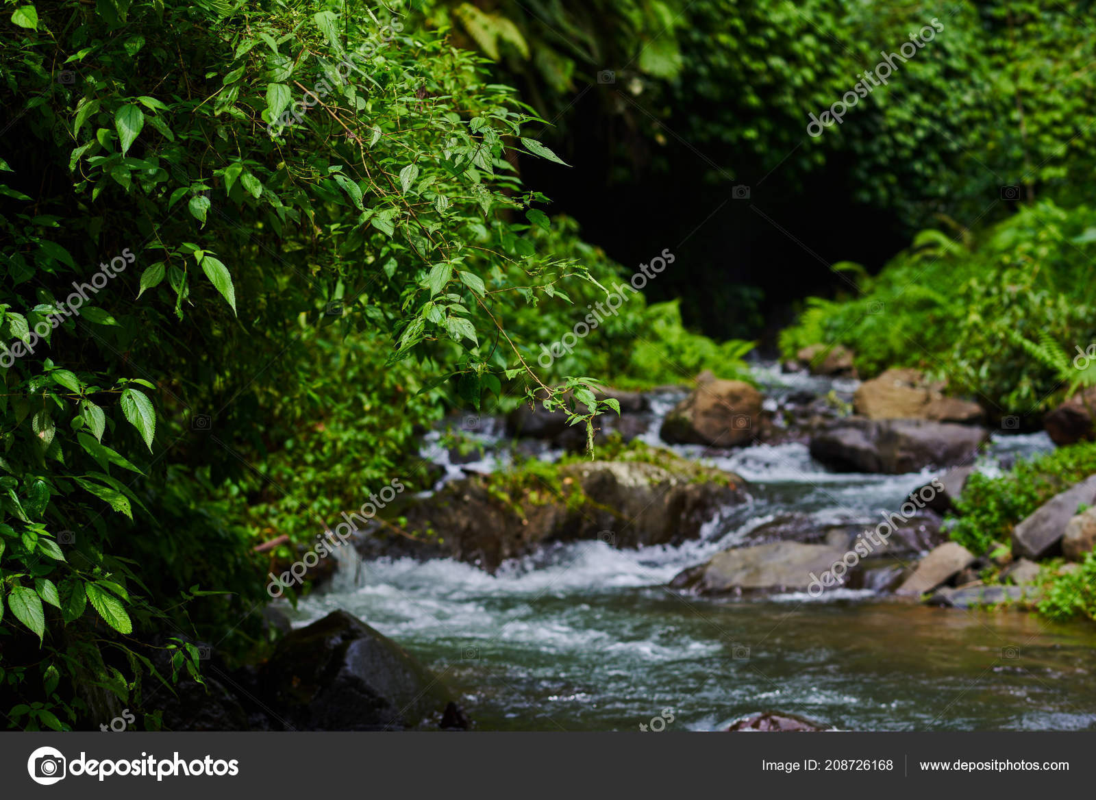 Pictures Streams In The Forest River Water Rocks Forest
