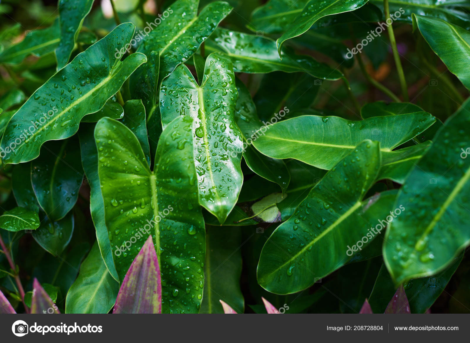 Pictures Foliage Plant Leaves Tropical Plants Rain Drops Shade