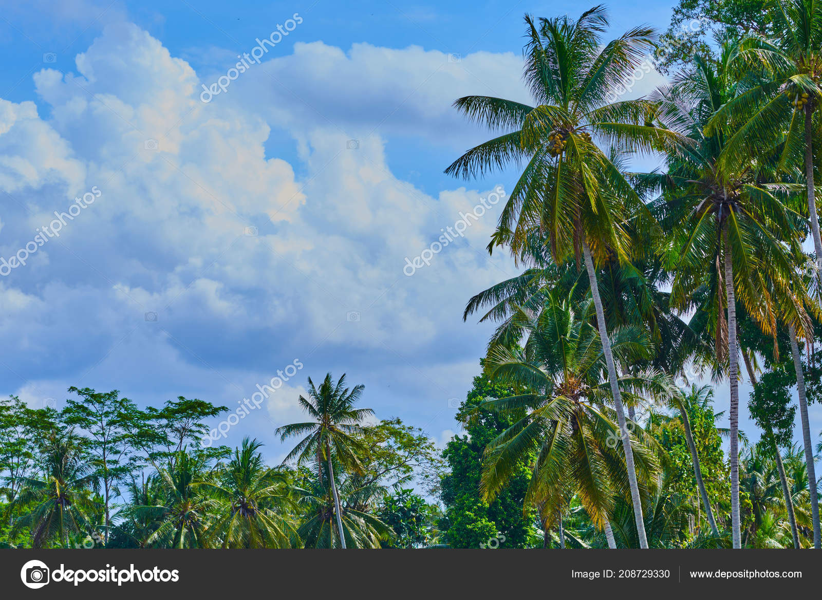 Wallpapers: palm trees wallpaper hd