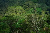Tree crowns. View of mixed rainforest with many varieties of trees. Beautiful green forest background. Fresh green forest  with shades of green trees pattern. Curved trunk and branches tropical plants