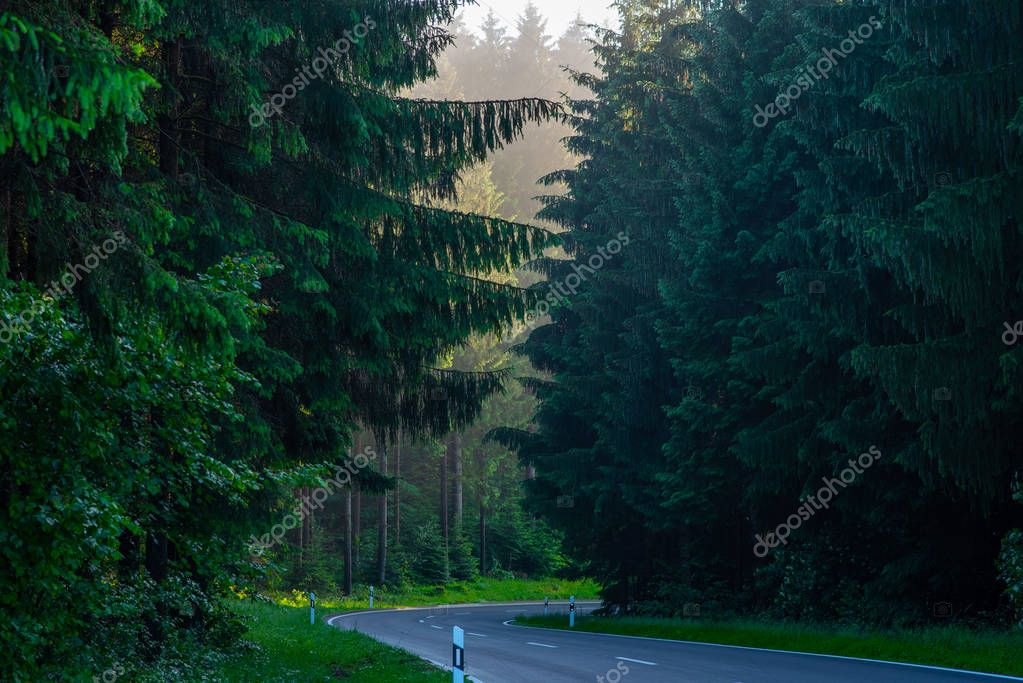 Curvy road with ancient trees beside in Black Forest, Germany.
