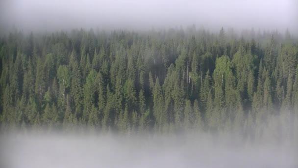 hustá mlha pokrytá hustým jehličnatým lesem.