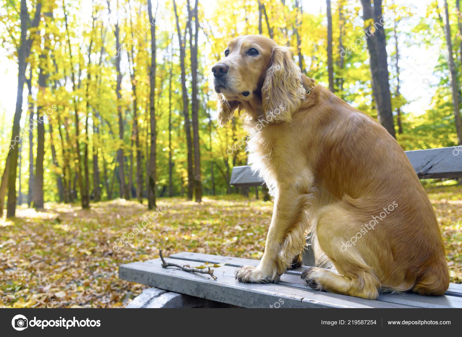Hund Herbst Park Auf Einer Bank Stockfoto Gor 71 At Mailru 219587254