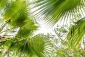 Fotografie Detailní záběr z palmových listů ve dne