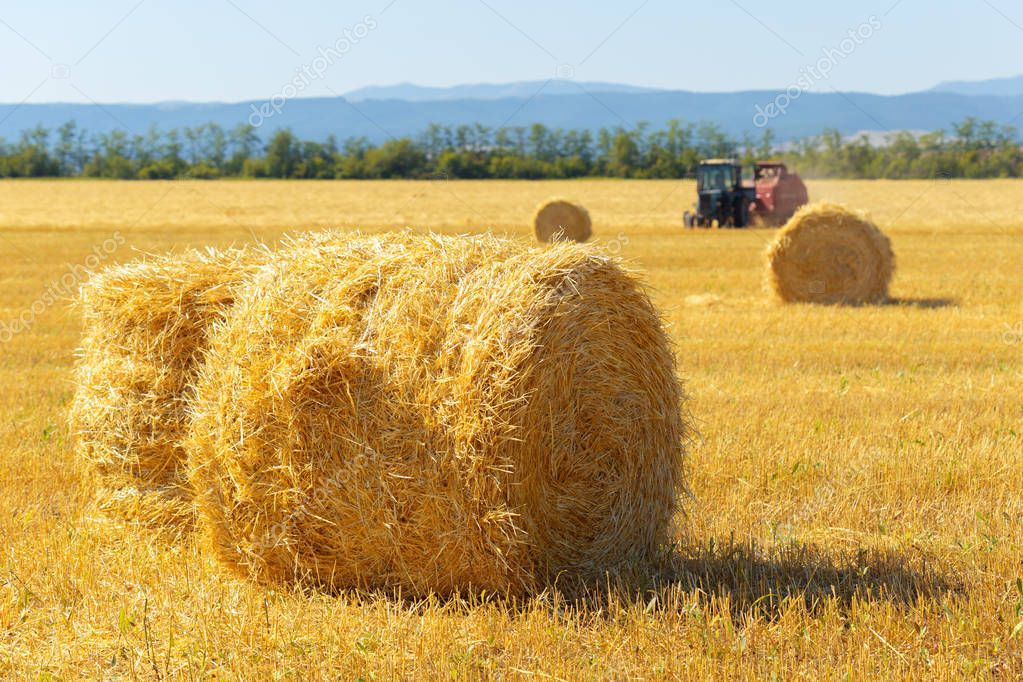 Golden hay bales in countryside at sunny day