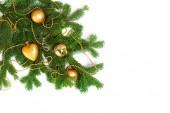 Fotografie Vánoční stromek větve izolovaných na bílém pozadí