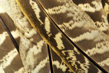 Brown and white feathers pattern background