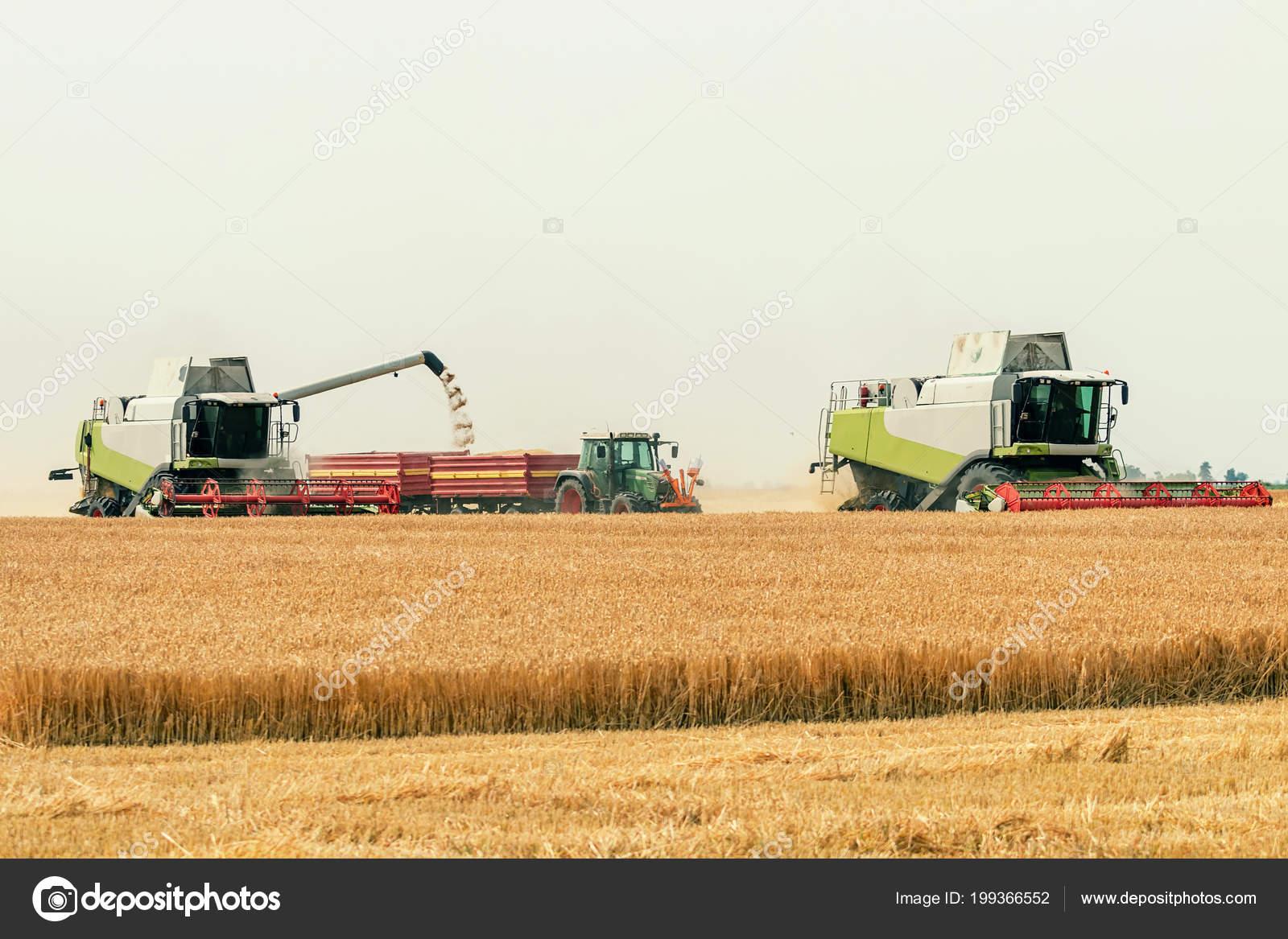 3e5e232774 Mietitrebbiatrice Lavorando Campo Grano Raccolta Del Frumento– immagine  stock