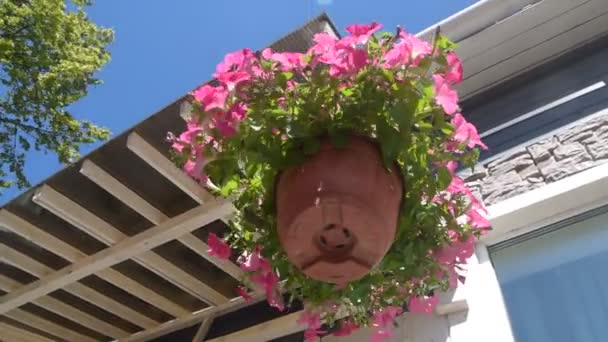 the planter pot flower dangle in the wind