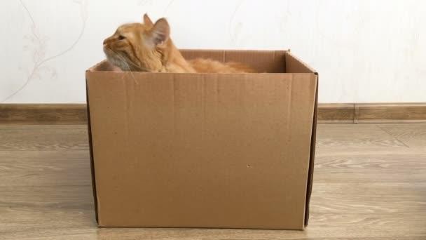 Aranyos gyömbér macska ül egy karton dobozban. Bolyhos kisállat elrejtése.