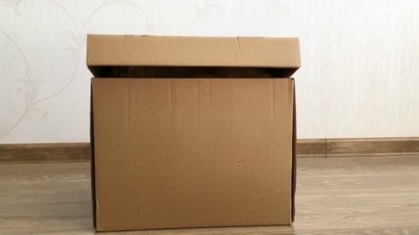Aranyos gyömbér macska ül egy karton dobozban. Bolyhos kisállat rejtőzik doboz fed.