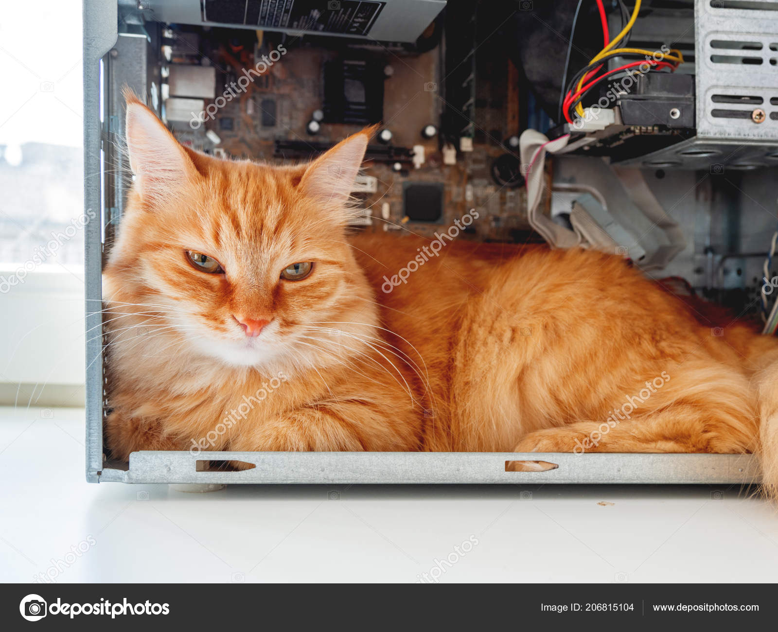 Cute Ginger Cat Lying Computer System Unit Fluffy Pet Wires — Stock ...