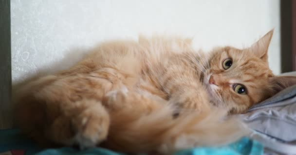Cute ginger cat lying on fabric. Fluffy pet comfortable settled to sleep.