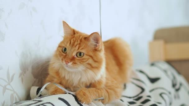 süße Ingwerkatze auf dem Sofa liegend. flauschiges Haustier geht schlafen und will nicht mit Schleife spielen. Gemütliches Zuhause.