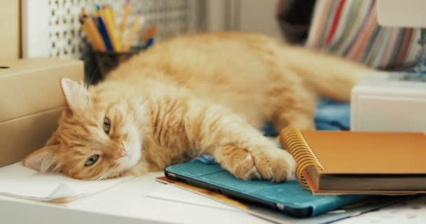 Die süße Ingwerkatze schläft zwischen Büromaterial und Nähmaschine. flauschiges Haustier dösen auf Schreibwaren. gemütlicher Hintergrund.