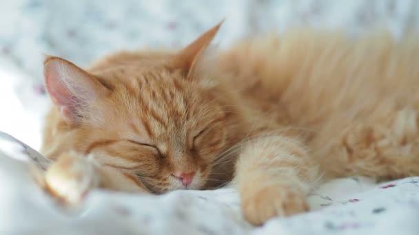 Aranyos gyömbér macska alszik az ágyban. Bolyhos kisállat szunyókált. Hangulatos otthoni háttér, reggel lefekvés előtt.
