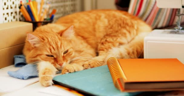 Roztomilý zázvor kočka spí mezi kancelářských potřeb a šicí stroj. Nadýchané pet podřimoval na šablonu. Útulný domov pozadí.