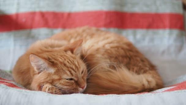 Aranyos gyömbér macska alszik a székre. Bolyhos kisállat szunyókált a csíkos szövet. Hangulatos otthoni