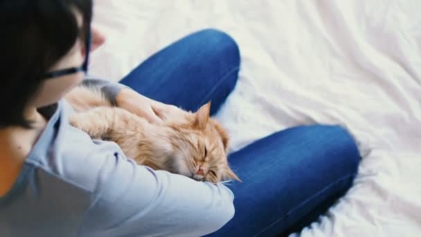 Ginger cat lies on womans hands. The fluffy pet comfortably settled to sleep or to play. Cute cozy background with place for text. Morning bedtime at home.