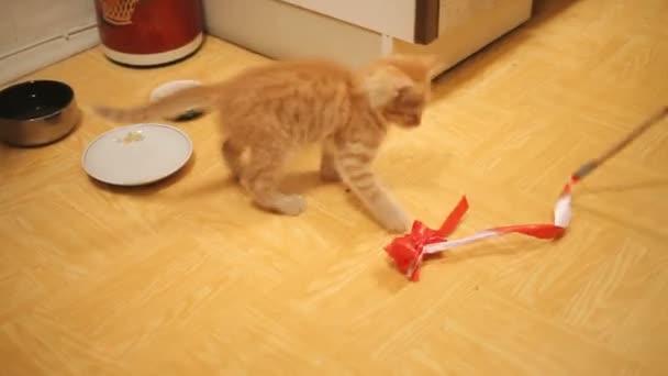 Kóbor cica került haza. Bolyhos játékos kisállat játék kötelet piros papír íjjal. Játékos fiatal macska.