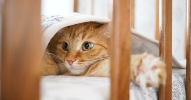Roztomilý zvědavý zázvor kočka ležící pod deku v dětské posteli. Nadýchané pet vystrčil hlavu mezi kolejnicemi postýlku. Příjemné ráno doma.