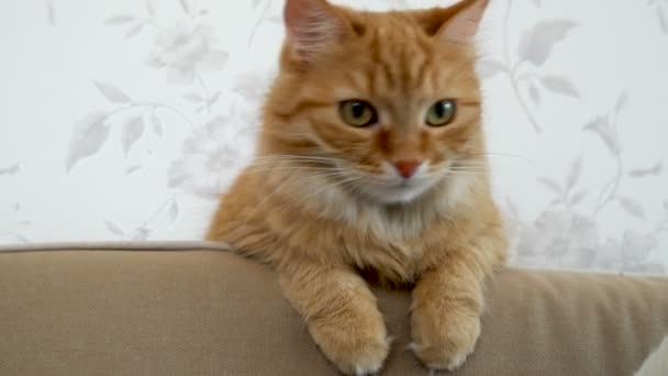 Cute ginger cat is sitting on couch. Cozy home. Fluffy pet looks with curiosity.