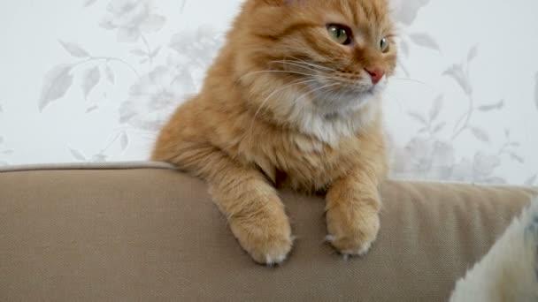 Die süße Ingwerkatze sitzt auf dem Sofa. Gemütliches Zuhause. Flauschiges Haustier schaut neugierig.