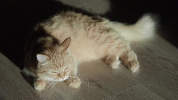 Cute ginger cat lying on floor. Fluffy pet at home.