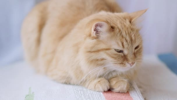 Cute ginger cat lying on spriped woven carpet. Fluffy dozing pet.