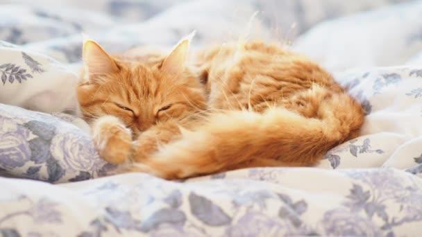 Niedliche Ingwerkatze im Bett auf einer Decke liegend. flauschiges Haustier bequem zum Schlafen. gemütliches Zuhause Hintergrund mit lustigen Haustier.