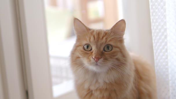 Aranyos gyömbér macska ül ablakpárkányon. Zár megjelöl lassú jelet ad hosszúság-ból bolyhos kisállat.