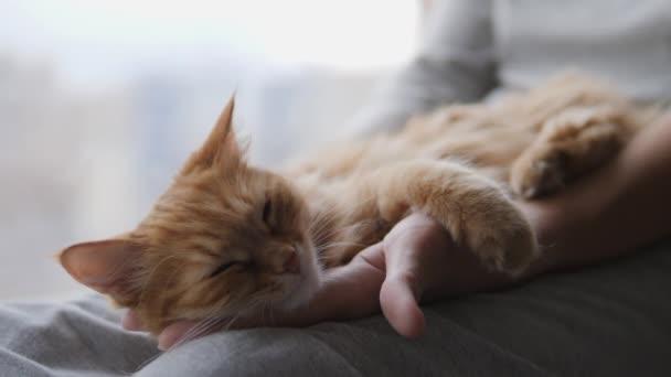 Žena hladí roztomilou zázvorovou kočku na parapetu. Chlupatý mazlíček předoucí radostí. Útulný domov.