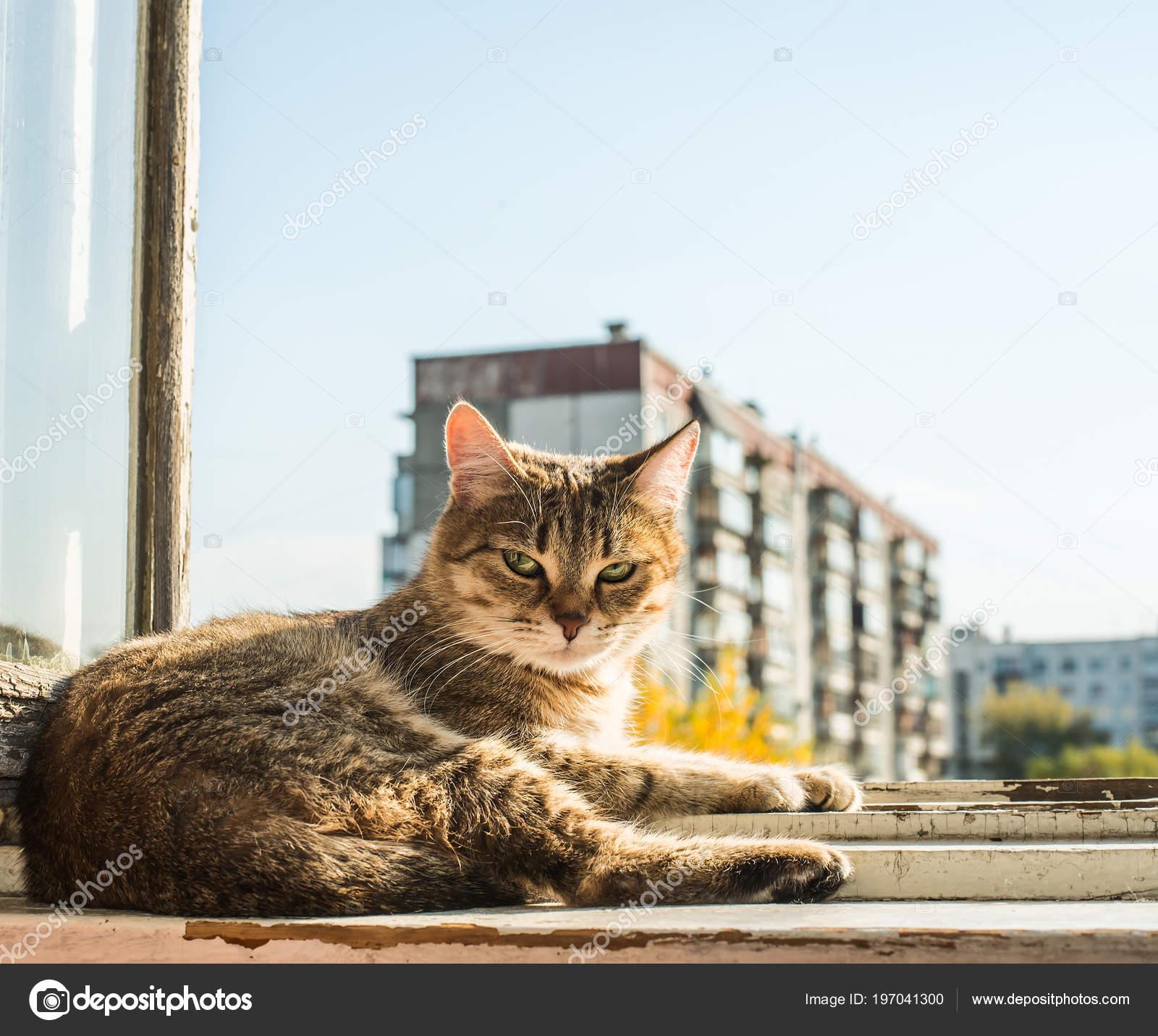 Gato Marco Metal Contra Cielo Azul Primavera Casa — Fotos de Stock ...