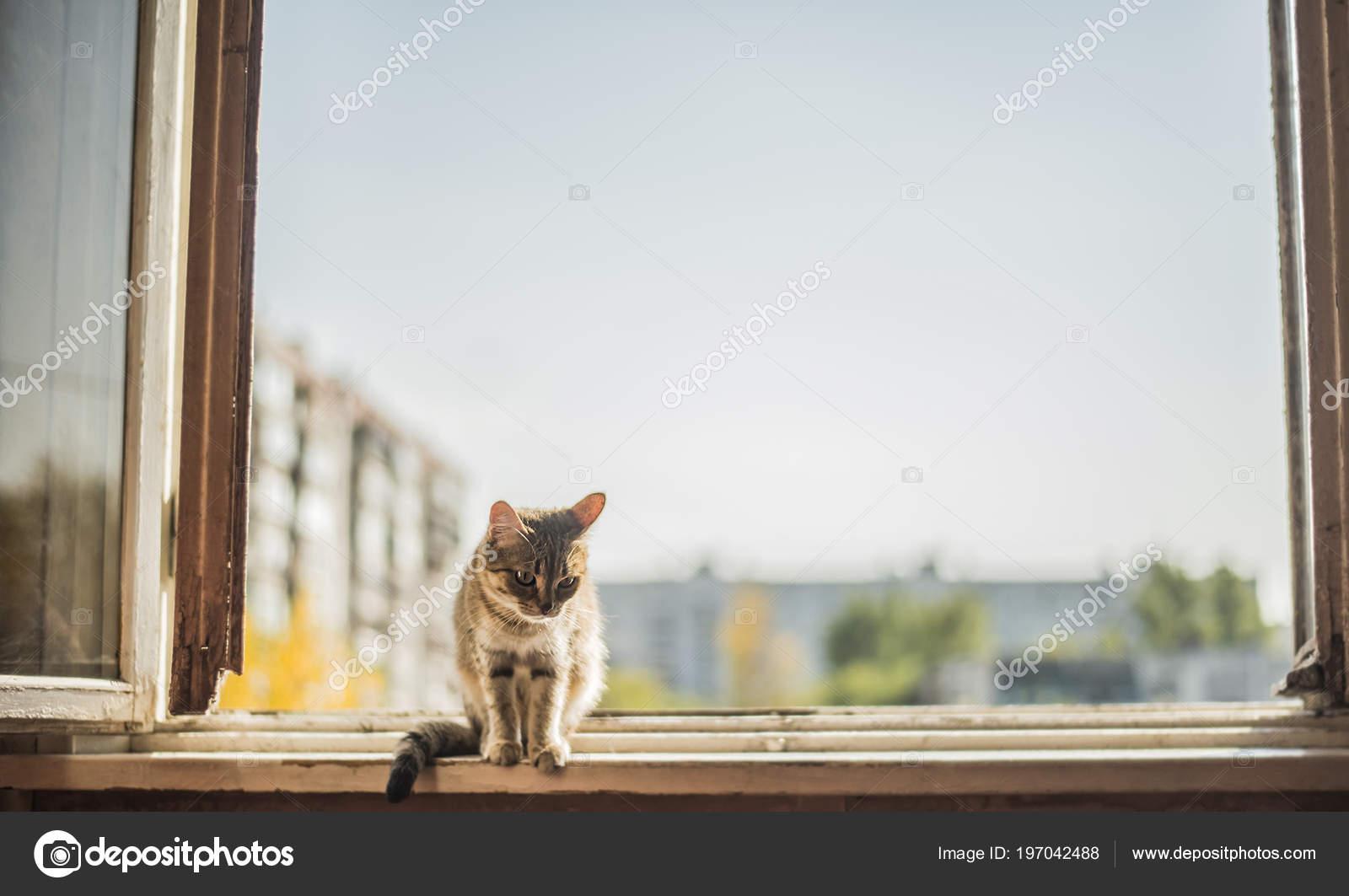 Gato Sentado Marco Metal Contra Cielo Azul Primavera Casa — Fotos de ...