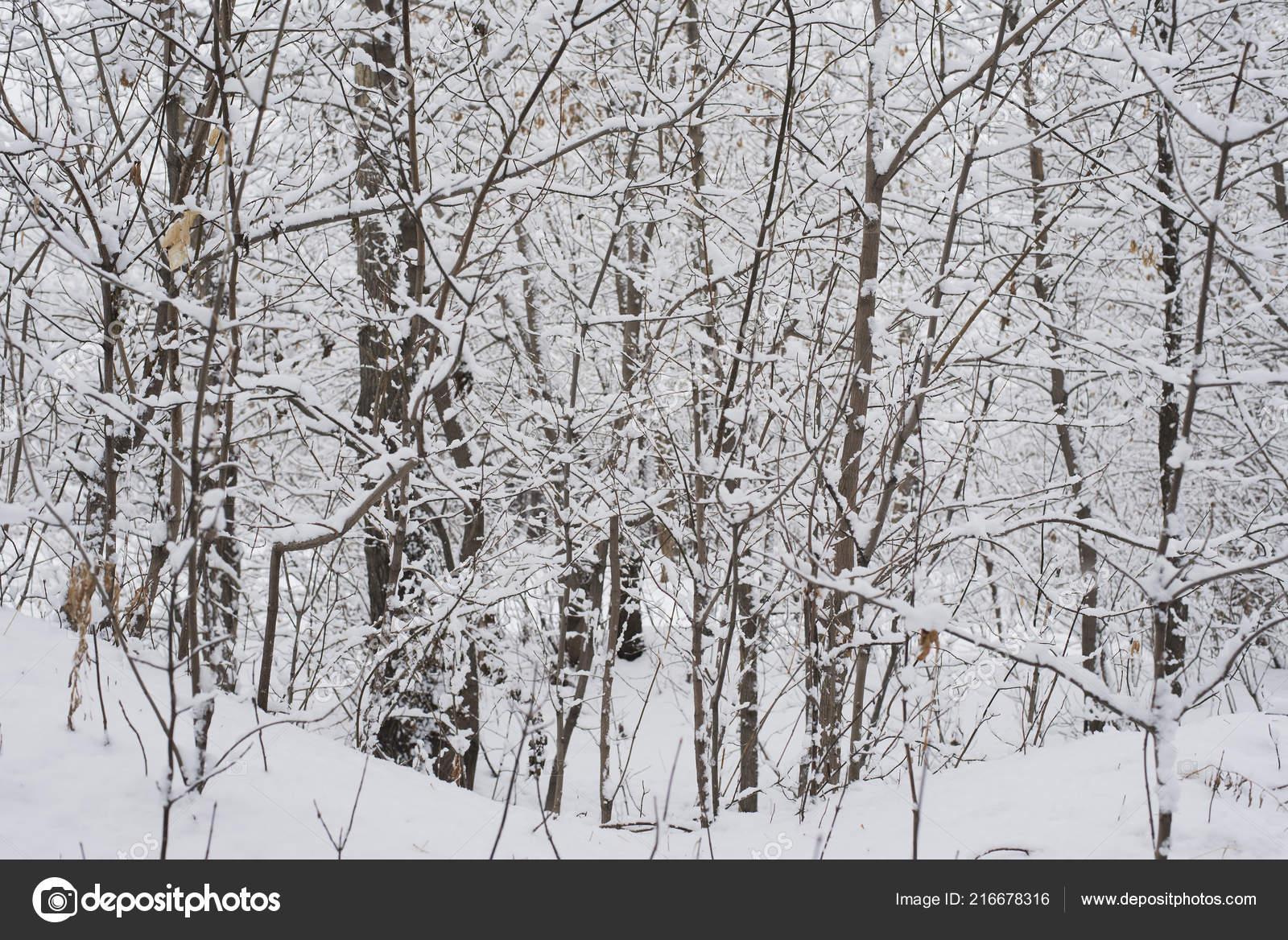 depositphotos 216678316 stock photo winter landscape park garden snow