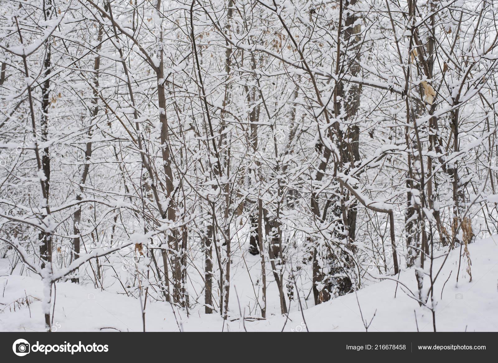 depositphotos 216678458 stock photo winter landscape park garden snow