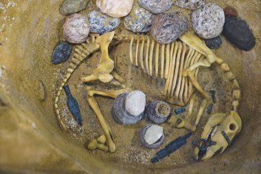 horse skeleton in burial ground. clay pots and arrowheads