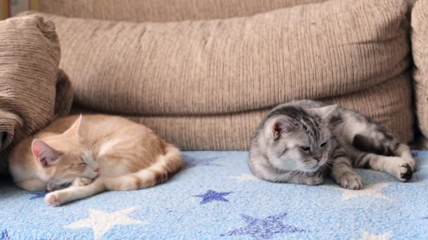 Two cats are lying on the sofa dozing