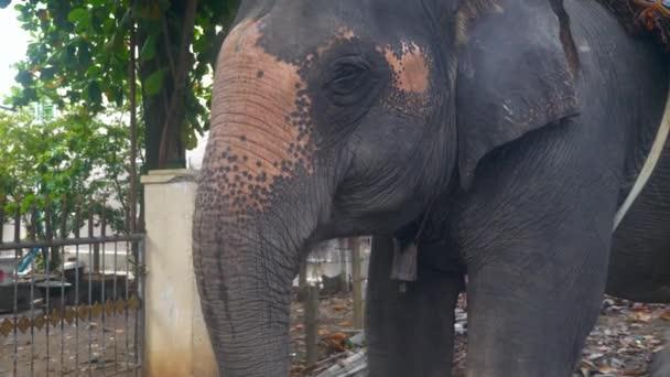 slon, jíst něco (Detailní záběr)