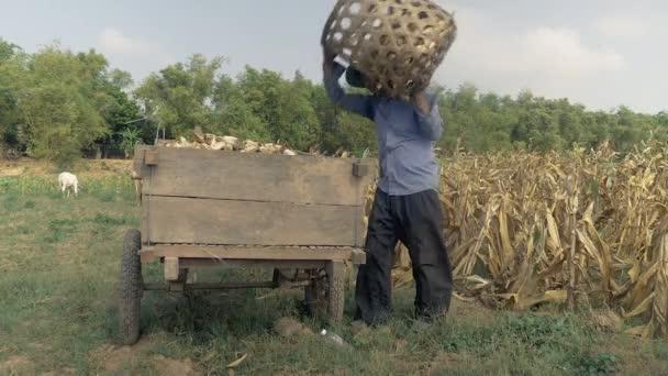 Landwirt entlädt abgeernteten Mais aus Bambuskorb auf Holzkarren am Feldrand (Nahaufnahme) )