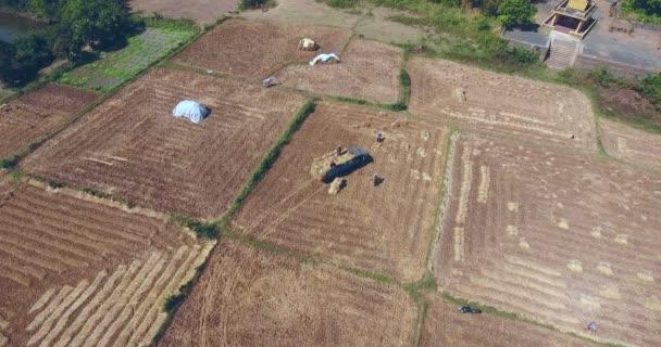 Statische Luftaufnahme von Bauern, die Strohbündel vom Reisfeld in einen LKW laden