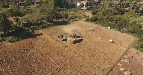 aerial static view of farmers threshing rice with a machine in a field