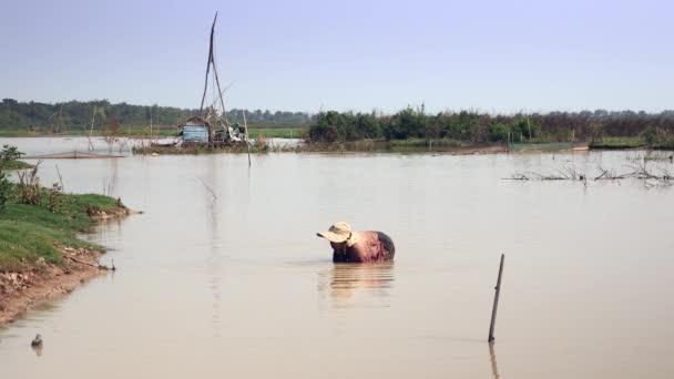Žena v mělkých vodách sběru škeble pomocí bambusové koše. Čínské rybářské sítě jako pozadí